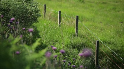 Забор в поле