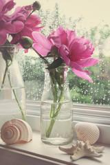 Peony flowers in milk bottles in the window