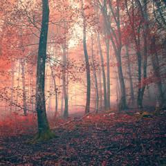 Red color fantasy light forest