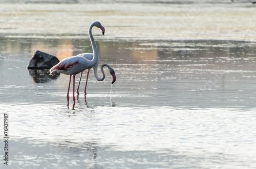 Aluminium Flamingo fenicottero