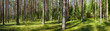 Leinwanddruck Bild - Summer forest panorama