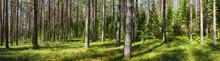 """Постер, картина, фотообои """"Summer forest panorama"""""""