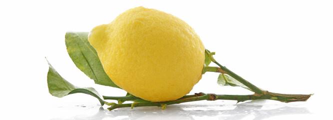 Citron sur sa branche