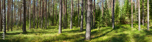 AluDibond Wald Summer forest panorama