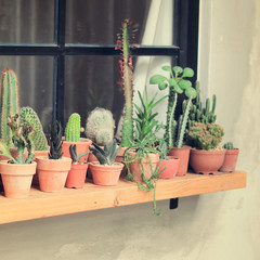 Various of cactus for decorated with retro instagram filter effe