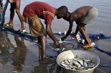 Fischers Ausbeute