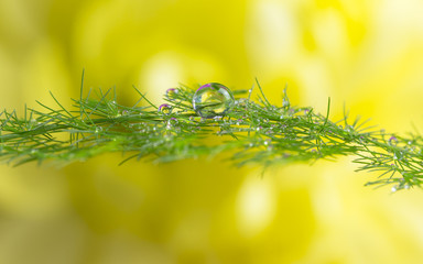 dew drops on green plant
