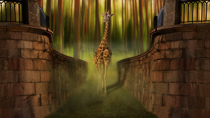 giraffe out of the magical forest