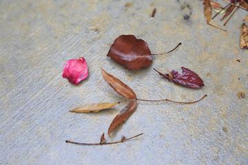 Red wet leaves on the asphalt