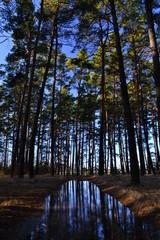 Отражение леса