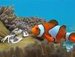 Leinwanddruck Bild - Memo und Krabbe und Anemone