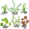 Different kinds of algae set - 76446788