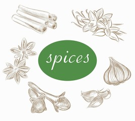 herbs and spices. vector sketches