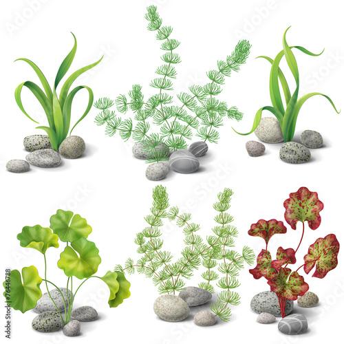Different kinds of algae set - 76446788