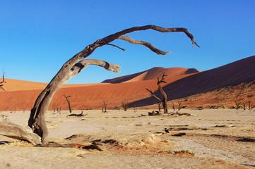 Landscape of Dead Vlei desert, Namibia, South Africa