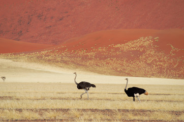 African dunes desert landscape with ostrichs, Namibia