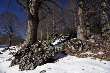 cambiamenti climatici e scioglimento della neve
