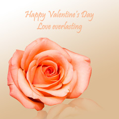 Valentine card with rose background