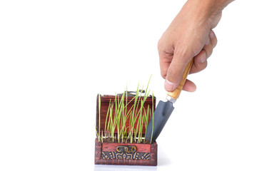 Hand transplanting a vegetable seedling from a pot - Stock Image