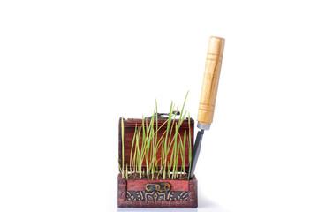 Growing a Seedling in Organic Soil - Stock Image