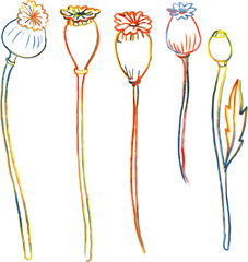 Line drawing poppy stalks