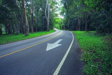 asphalt road in deep forest use as landtransport in nature wild