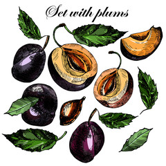 Set with beautiful ripe plums and leaves