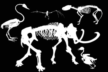 set of animals and birds skeletons isolated on black