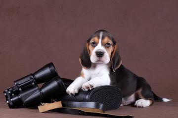 Puppy with binoculars