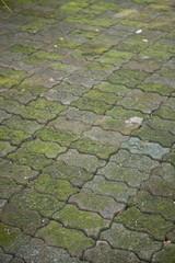 walkway with green moss
