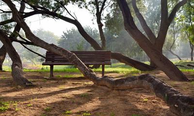 ..Park trees bent around benches