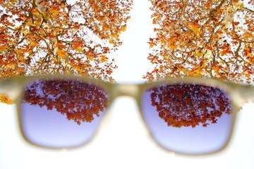 Autumn leaves through sunglasses