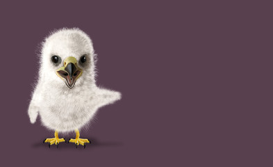 Funny Eagle chick