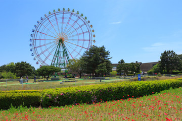 Ferries wheel at the Hitachi Seaside Park in Hitachinaka city, I