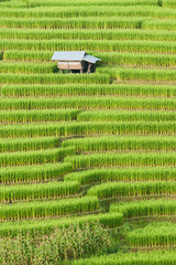 Rice field terrace with shack at Mae Jam, Chiangmai, Thailand.