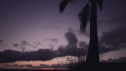 Palm tree at dusk in Cleveland, Brisbane, Australia.