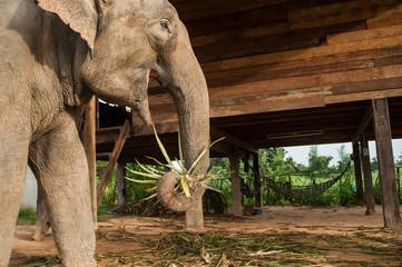 Elephant Village (Study Center) Surin Thailand