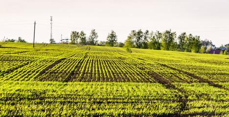 fresh ploughland