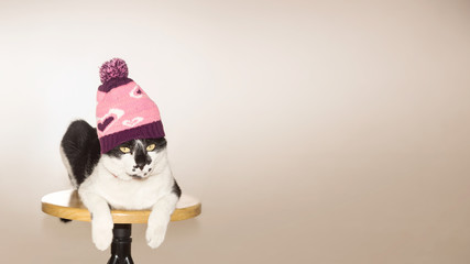 Cat in knitted hat