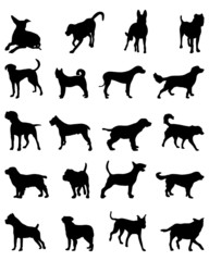 Silhouettes of different breeds of dogs, vector