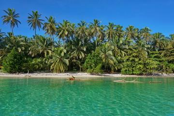Sandy Caribbean shore and lush tropical vegetation