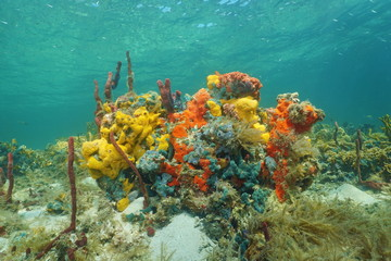 Underwater reef with gorgeous colors of sea sponge