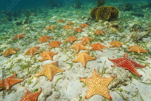 Fotobehang Koraalriffen Group of starfish Cushion sea star on sea bottom