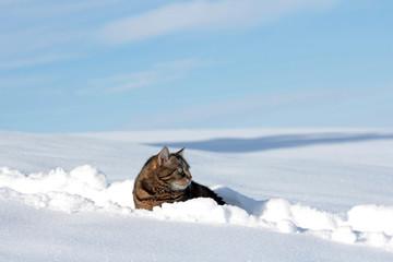 Katze im hohem Schnee