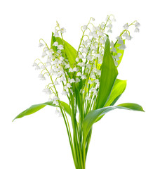 beautiful bouquet of lily the valley flower is isolated on white