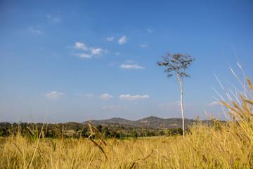 Meadow, trees, sky, blue, grass, green, brown.