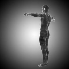 Conceptual wireframe human anatomy
