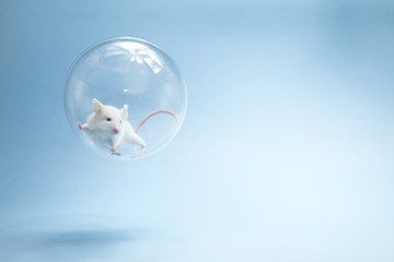 La souris dans l'espace