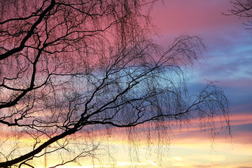 Zweige und Abendhimmel