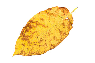 Yellow leaf in autumn